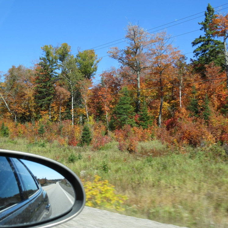 Fall Leaves on a Roadtrip Across Canada