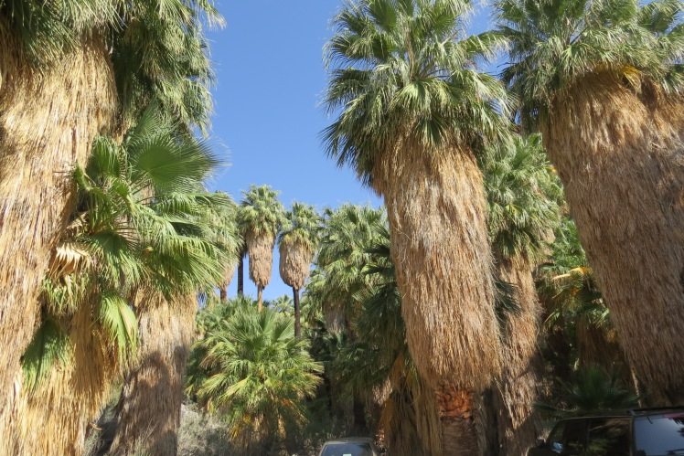 Indian Canyons, Palm Springs Hikes